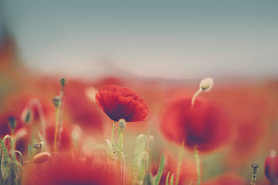 Summer Poppy Meadow Poster by Nailia Schwarz