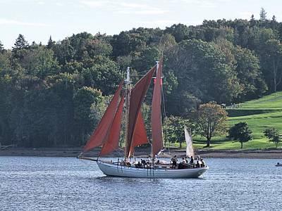Summer Sailing In Lunenburg Poster