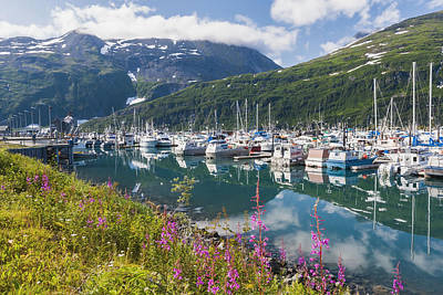 Summer View Of Whittier Boat Harbor Poster