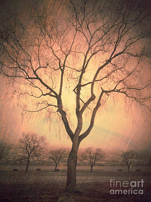 Summerland Light In Winter Poster