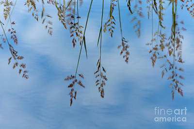 Summers Reflection Poster by Beve Brown-Clark Photography