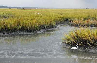 Summertime Salt Marsh Poster