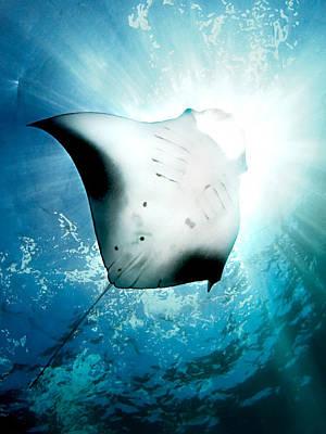 Sun Diver Poster