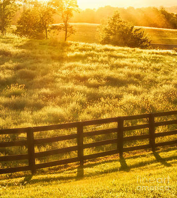 Sun-drenched Pasture Poster by Mark Miller