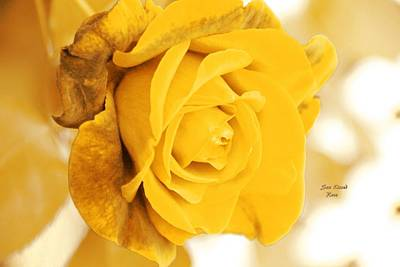 Poster featuring the photograph Sun Kissed Rose by Athala Carole Bruckner
