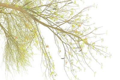 Sun Light On Tree Poster