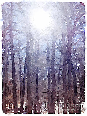 Sun On Cold Trees Poster by Janet Dodrill