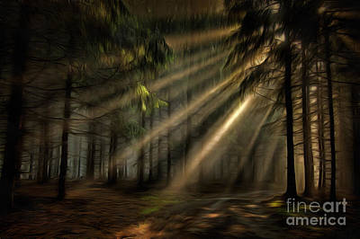Sun Rays In The Forest Poster by Michal Boubin
