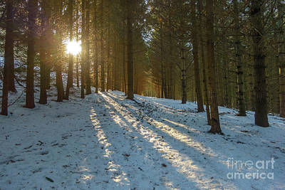 Sun Setting On Winter Woods Poster by Norman Pogson