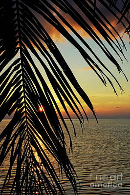 Sun Setting Over The Sea Seen Through A Silhouetted Coconut Palm Frond Poster by Sami Sarkis