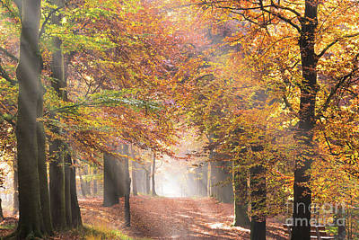 Sunbeams In A Forest In Autumn Poster
