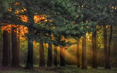 Sunbeams Through The Trees Poster