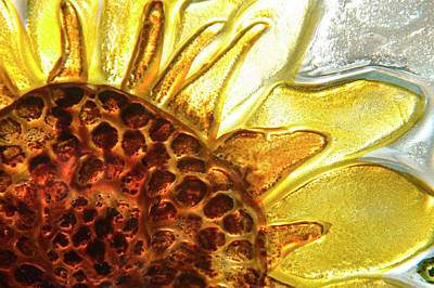 Sunburst Sunflower Poster by Jerry McElroy