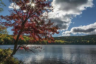 Sunburst Tree At Silvermine Lake Poster