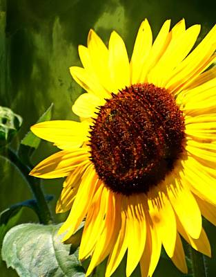 Sunflower 4 Poster