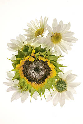 Poster featuring the photograph Sunflower And Daisies by Roman Kurywczak