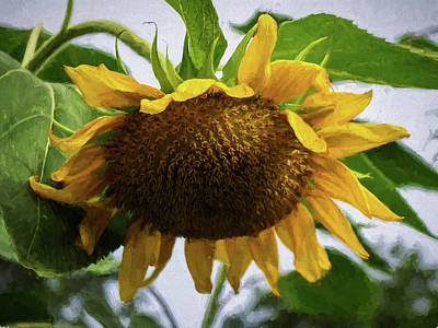 Sunflower Art II Poster