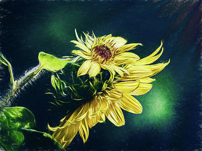 Sunflower At Sunrise Poster by Bob Orsillo