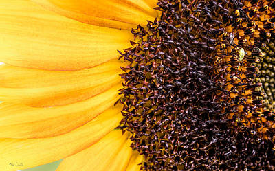 Poster featuring the photograph Sunflower Closeup by Bob Orsillo