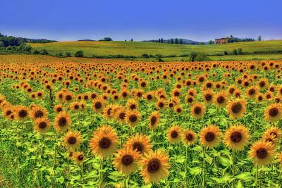 Sunflower Dance Poster by Midori Chan