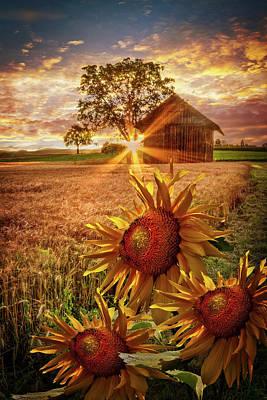 Sunflower Evening Poster by Debra and Dave Vanderlaan