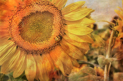 Sunflower Field At Colby Farm Poster by Joann Vitali