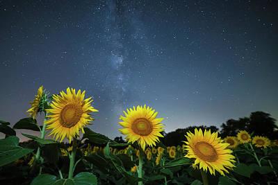 Sunflower Galaxy V Poster