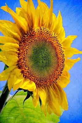 Sunflower Plant Poster