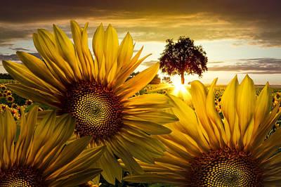 Sunflower Heaven Poster