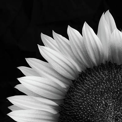 Sunflower In Bw Poster by Joseph Smith