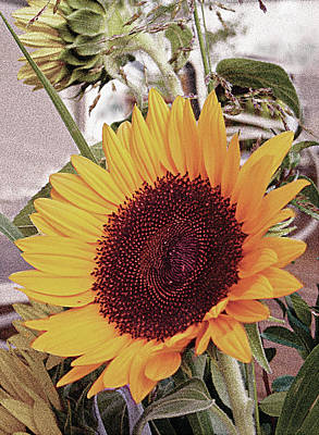 Poster featuring the painting Sunflower by John Dyess