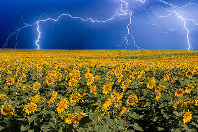 Poster featuring the photograph Sunflower Lightning Field  by James BO  Insogna