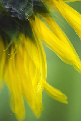 Sunflower Motion Blur Poster by Christina Rollo