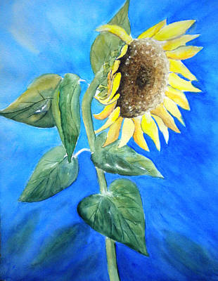 Sunflower  Poster by Sandy Fisher