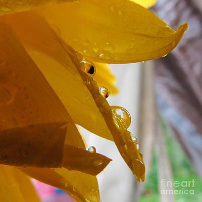 Sunflower Series II Poster