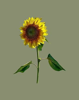 Sunflower Standing Tall Poster by Susan Savad