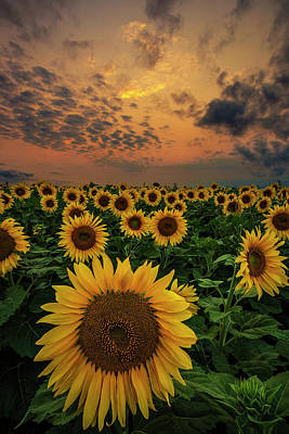 Poster featuring the photograph Sunflower Sunset  by Aaron J Groen