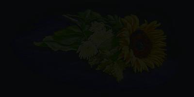 Sunflower Poster by Vanda Luddy