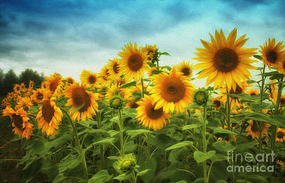 Sunflowers All Over Poster
