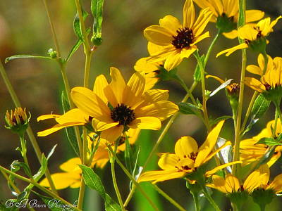 Poster featuring the photograph Sunflowers Along The Trail by Barbara Bowen
