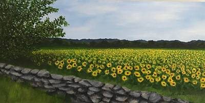 Sunflowers At Buttonwood Farms Poster