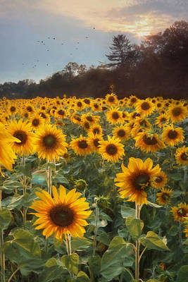Sunflowers At Sunset Poster by Lori Deiter