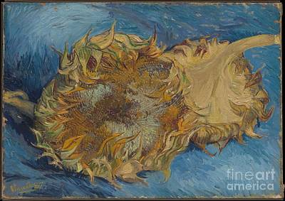 Sunflowers Poster by Celestial Images