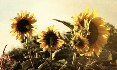 Poster featuring the photograph Sunflowers In Tone by Glenn McCarthy Art and Photography