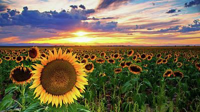 Sunflowers Of Golden Hour Poster by John De Bord