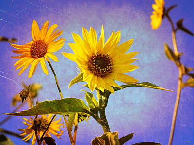 Poster featuring the photograph Sunflowers - The Arrival by Glenn McCarthy Art and Photography