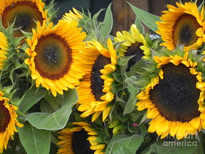 Poster featuring the photograph Sunflowers Two by Chrisann Ellis