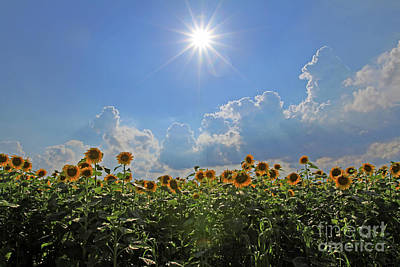 Sunflowers With Sun And Clouds 1 Poster