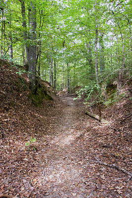 Sunken Old Trace, Natchez Trace Parkway Poster