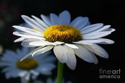 Sunlight Flower Poster by John S